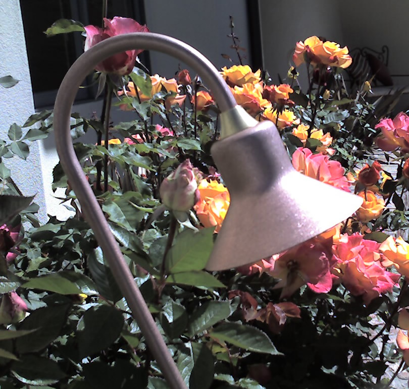 Landscape Lighting Camarillo Tulip Light